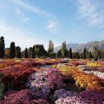 Irán en primavera
