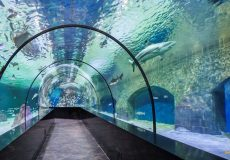 isfahan-aquarium-tunnel-1