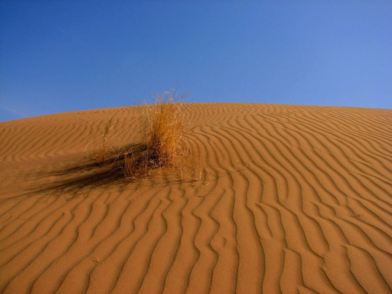 maranjab desert (4)