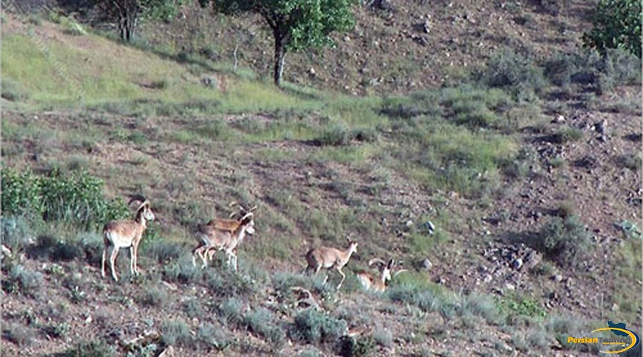 khojir-and-sorkhe-hesar-national-park-1