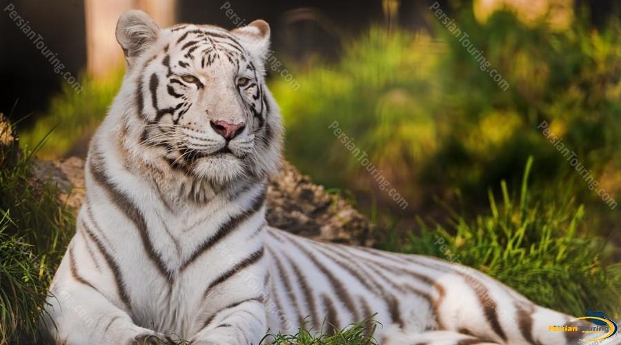 tehran-zoo-1