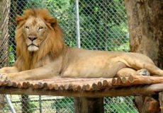 tehran-zoo-2