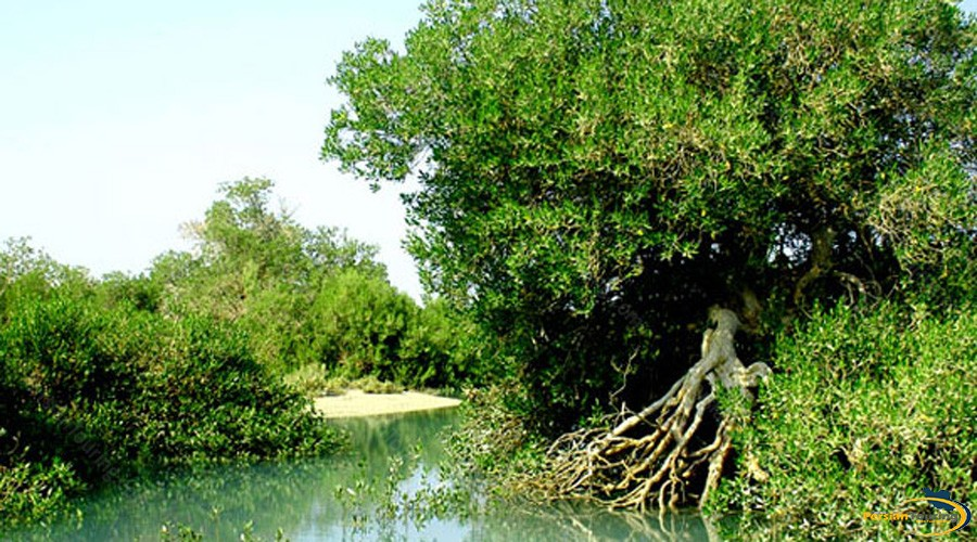harra-(mangrove)-protected-area-1