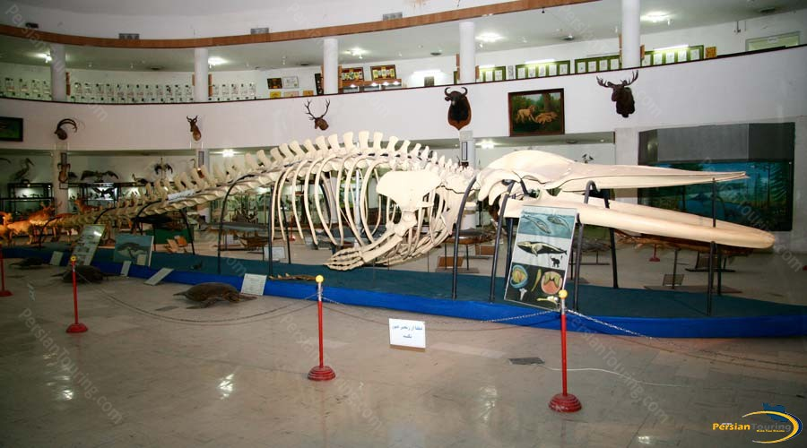 natural-history-and-technology-museum-2