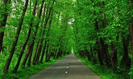 safrabasteh-road-2