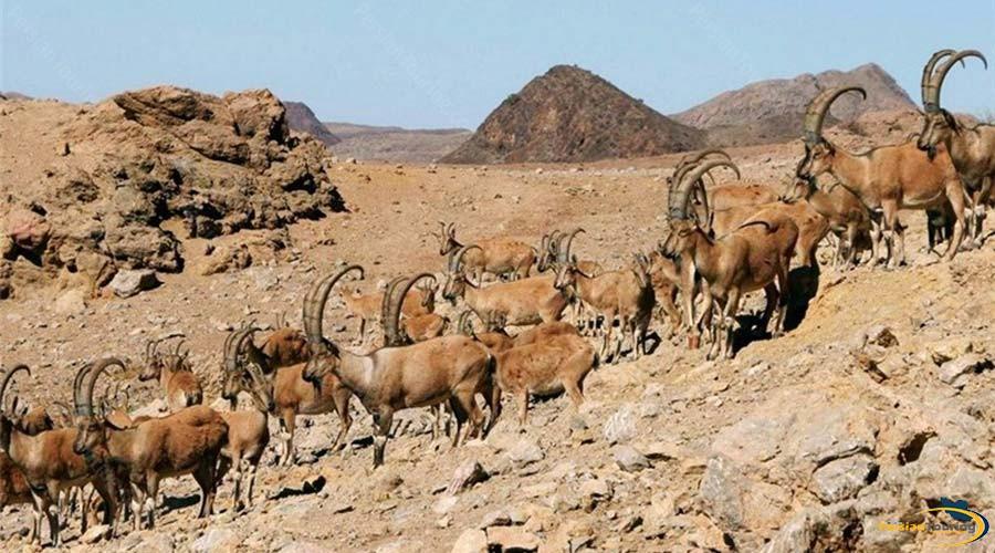 protected-wildlife-zones-2
